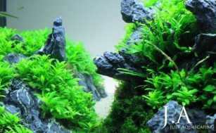 Aquascaping `on the rocks`